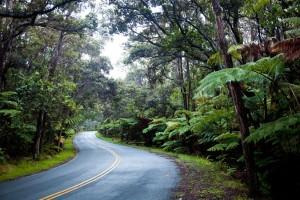 üppig bewachsener Teil Big Islands in der Gegend von Hilo