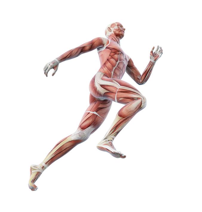 Was sind eigentlich Muskelketten? - tritime - Leidenschaft ...
