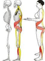 Spirale Muskelketten